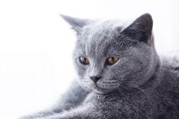 Young cute cat close-up portrait.