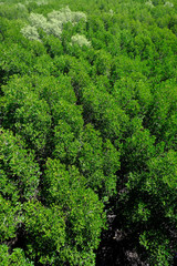 Aerial view of the evergreen forrest