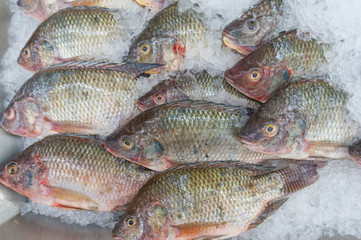 Nile tilapia, Mango fish, Nilotica