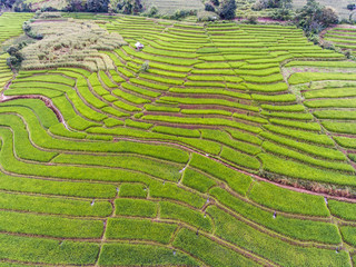 Terraced Rice Field in Hill, Chaingmai, Thailand