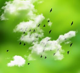 el cielo y el bosque  vistos desde un avion