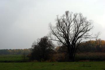 Autumn landscape, trees in a meadow in light fog