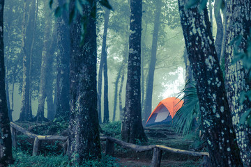 A tent in the misty forest, cold tone