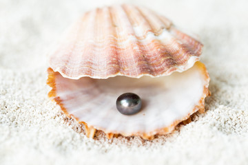 Sea shell and Black Pearl