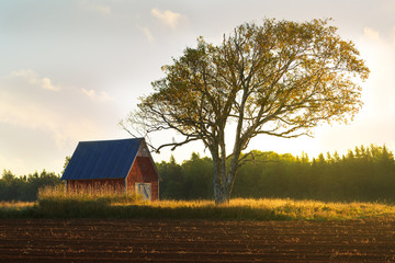 Sunrise over the trees and field of a farm in rural Prince Edward Island, Canada.