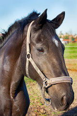 Portrait of the horse in the field