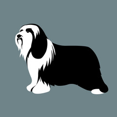 polish low land sheepdog vector illustration style