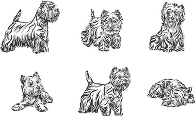 Dog, terrier, portrait, white, black, vector