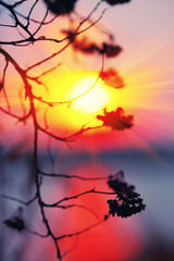 Abstract Plant Silhouette at sunset.