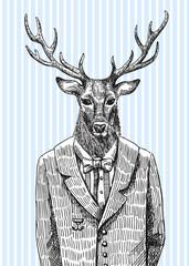 Deer in jacket.