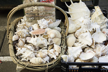 Sea shells for sale