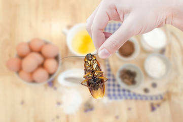 Woman's Hand holding cockroach on food kitchen background, eliminate cockroach in kitchen