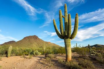 Arizona Desert Landscapes