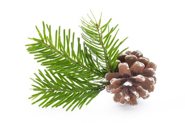 Fir tree branch and cones isolated on white background.