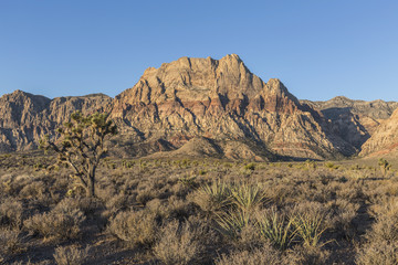 Red Rock Canyon National Conservation Area in Nevada
