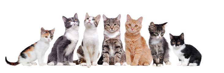 A group of cats sitting in a raw on white background Fototapete