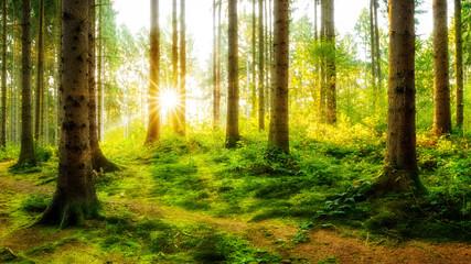 Idyllischer Sonnenaufgang im herbstlichen Wald
