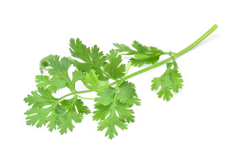 Coriander isolated on white