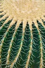 Close up photo of cactus