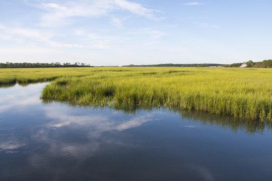 South Carolina salt marshlands