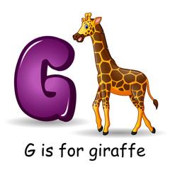 Animals alphabet: G is for Giraffe