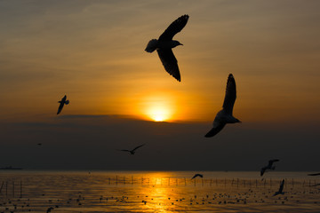 Foto auf Leinwand Rosa hell Seagull flying against sunset background in Bang-Pu coastal town