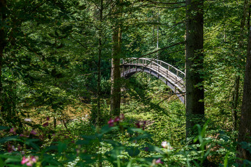 Wutach Gorge with river and bridge - Walking in beautiful landscape of the blackforest, Germany