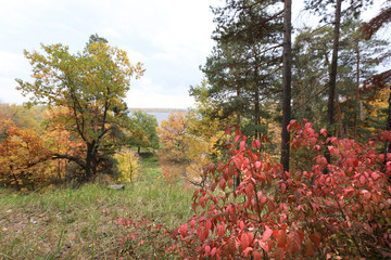autumn in the mixed forest