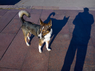 Dog on the square.