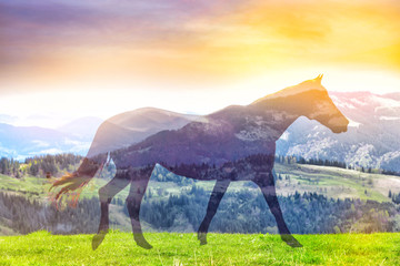 Horse on landscape background