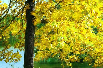 oak   in sunlight in the morning