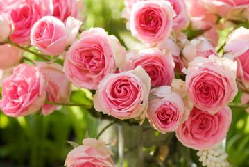 Rose branchue