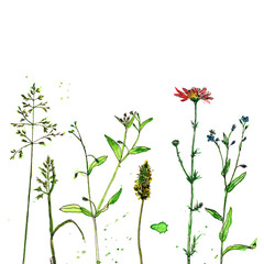 watercolor and ink drawing plants