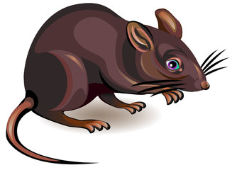 Illustration of rat on a white background, vector cartoon image.