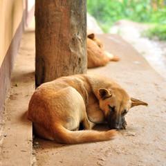 Thai stray dog sleeping on walkway