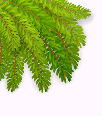 Vector christmas tree branch on white background