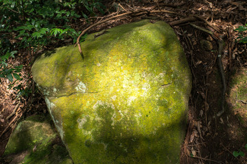 苔の生えた岩
