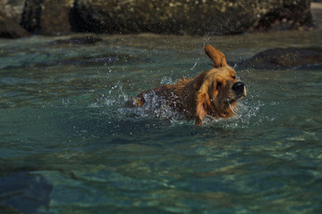 The dog swims in the sea