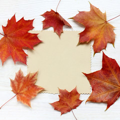 autumn wishes to warming/ patterned clean card for inscriptions, surrounded by maple leaves top view
