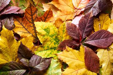 Yellow, red, green, orange leaves. Autumn, September, October and November.