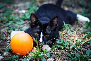 close up Thai black cat