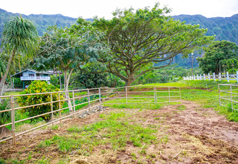 Open gate to the pasture. Horse farm exterior in New Zealand
