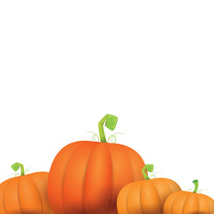 autumn vector pumpkins border design template