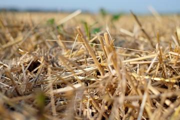 Beveled wheat field