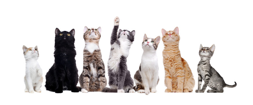 Group of sitting cats looking up isolated on white background