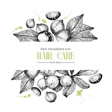 Vector set of hair care ingredients. Organic hand drawn elements. Template for macadamia branch.