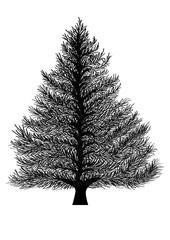 albero abete sagoma