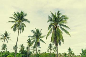 abstract coconut tree on retro filter sky