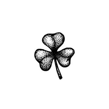 vector hand drawn shamrock illustration.