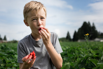Young bot standing in field, eating strawberry